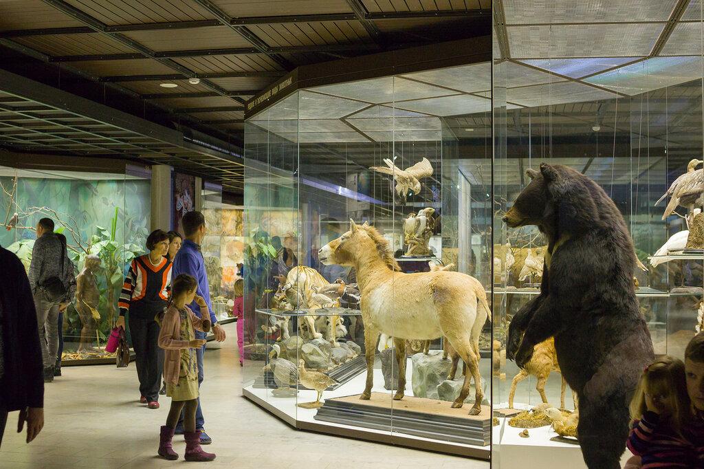 встретите москва музей дарвина фото порода
