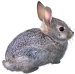 Rabbit 10.png