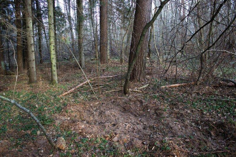 земля взрыта кабанами