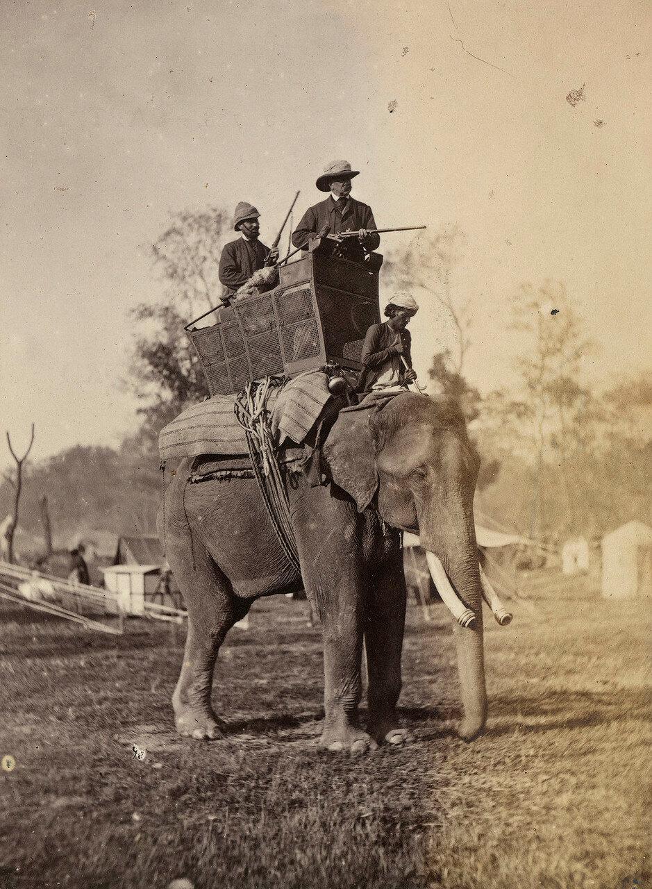 124. Лорд Альфред Пейдж (1816-88) на слоне