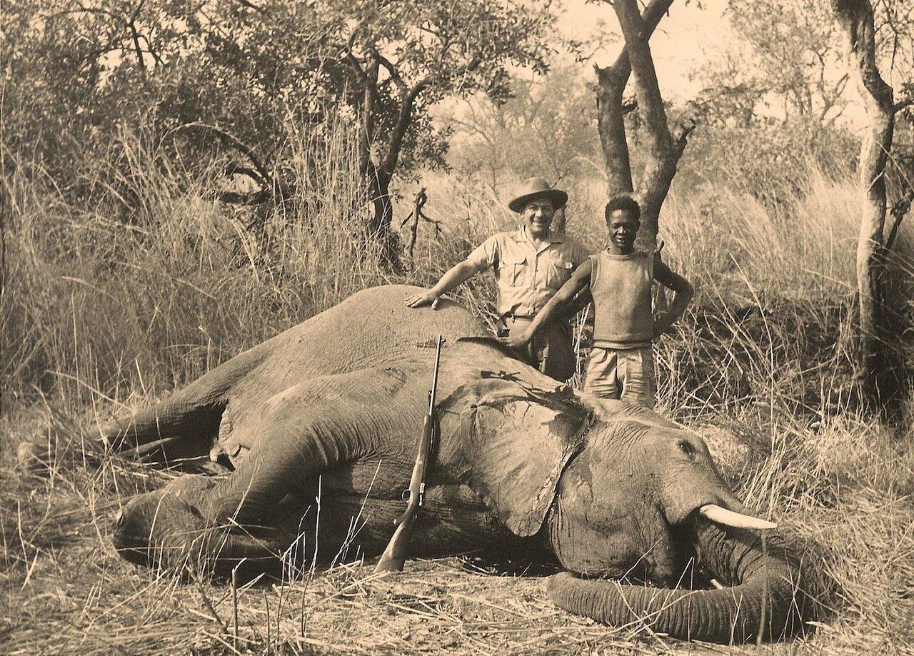 37. Поверженный слон