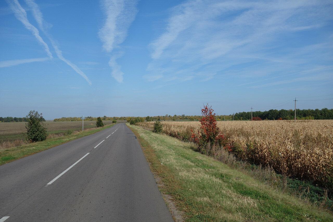 инверсионные следы, поле кукурузы и цветные кусты
