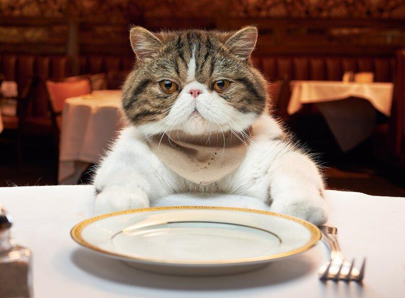 продукты опасные для кошек