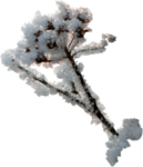 sd_woodland-winter-branch1.png