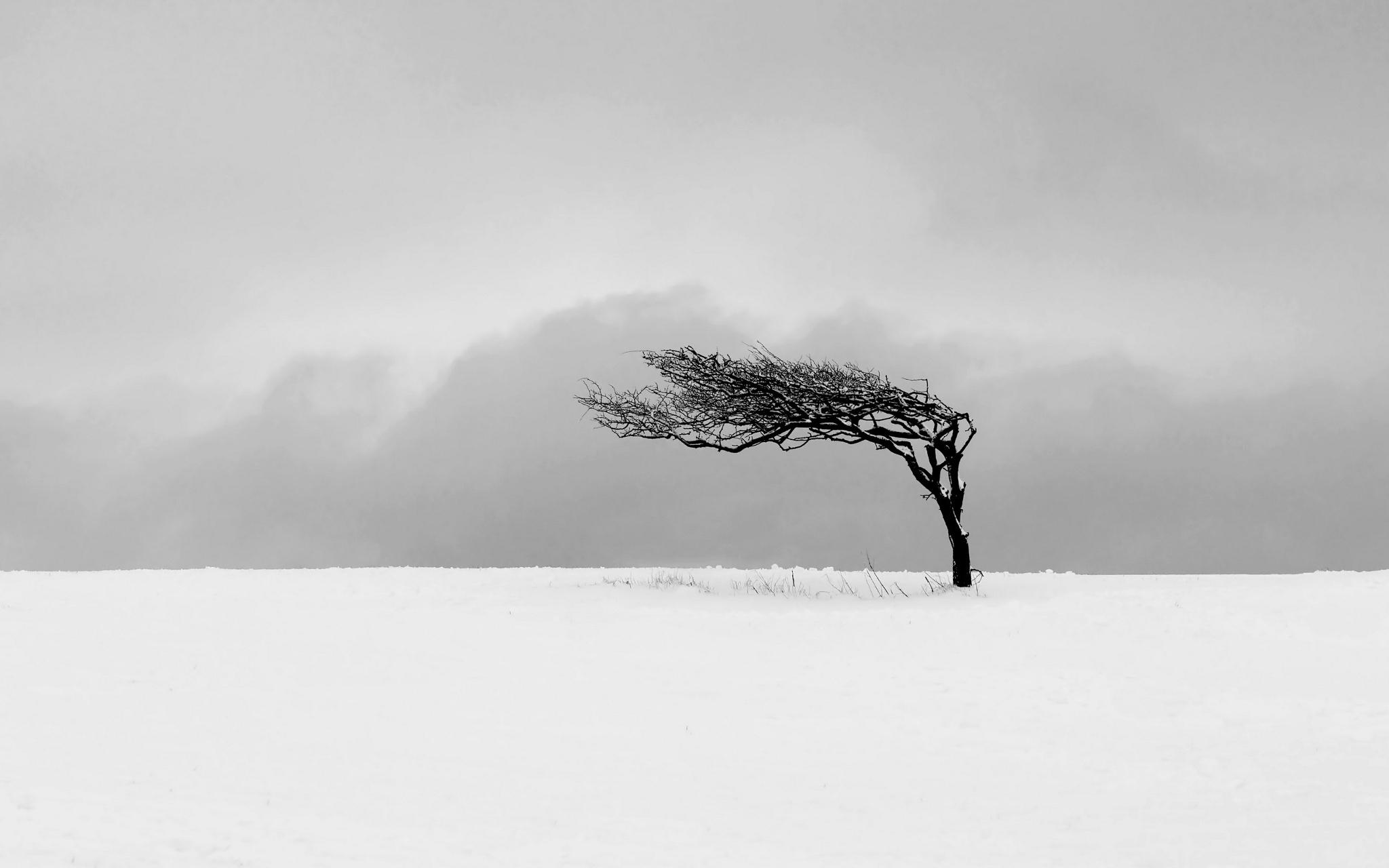 одинокое дерево ветер