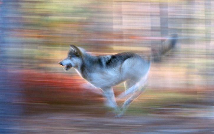 Дикие животные в движении от Art Wolfe (26 фото)