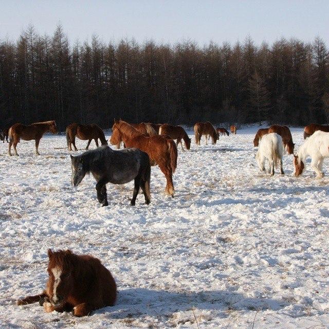 Магаданские кони Елизаветы Кончевой