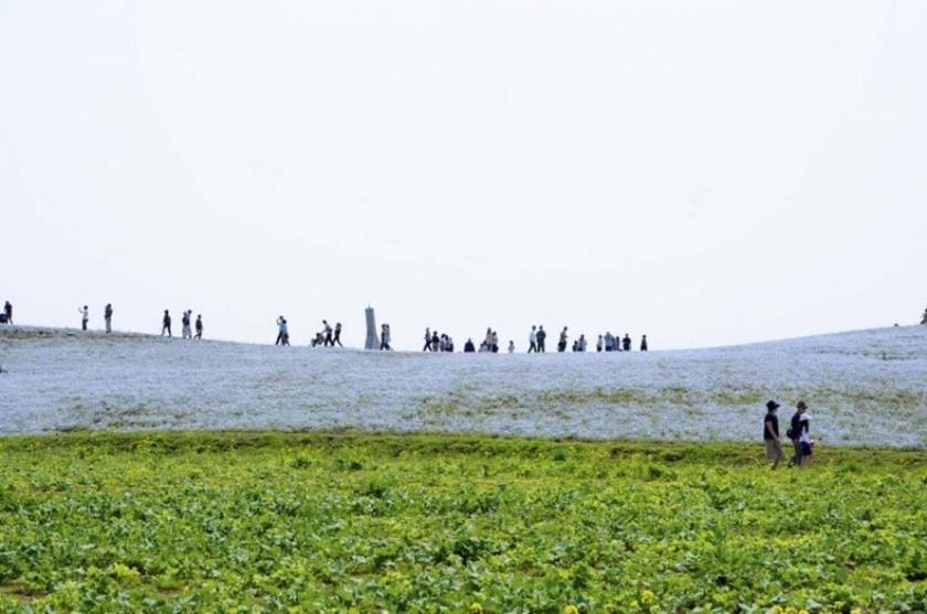 Живописный японский парк Хитати Кайхин 0 1422cc f6a1f57f orig