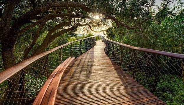 В ботаническом саду Кейптауна построена дорога-мост над верхушками деревьев