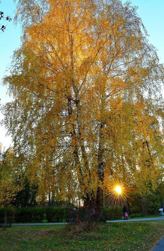 Солнечное золото.jpg