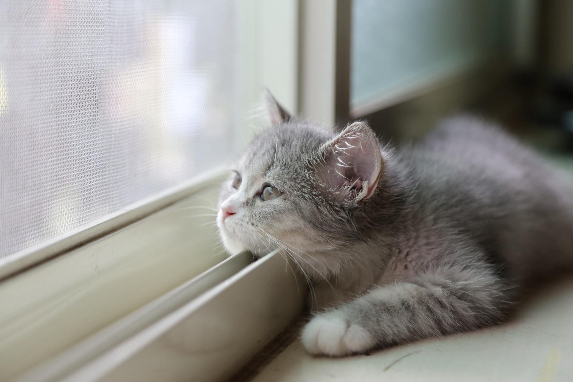 кот мечтает у окна