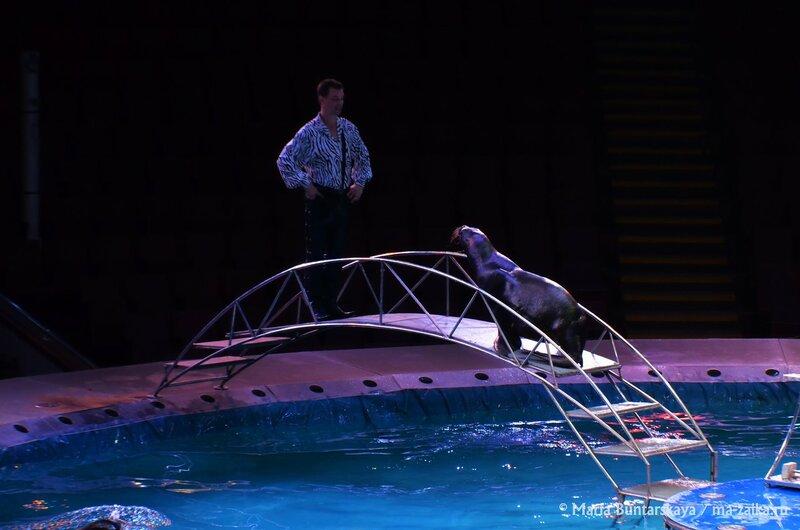 Цирк на воде, Саратов, 16 апреля 2015 года