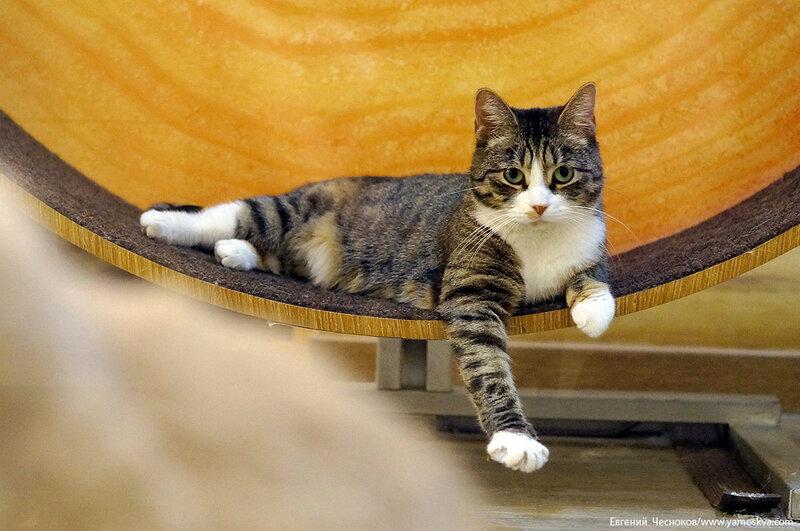 Осень. Театр кошек. Кошки. 15.10.15.13..jpg