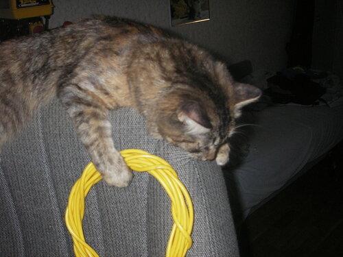 cat-admin.JPG