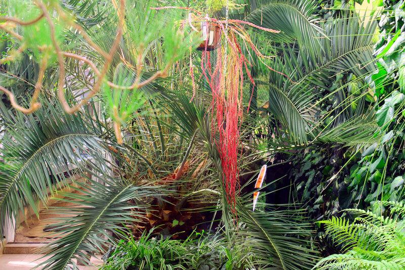 В саду Бромелий и Орхидей