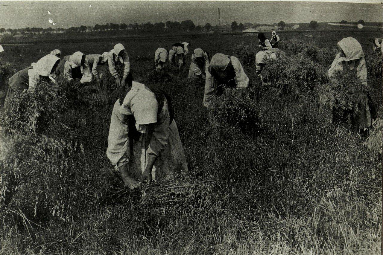 Галиция. Сбор урожая в районе Стрыя