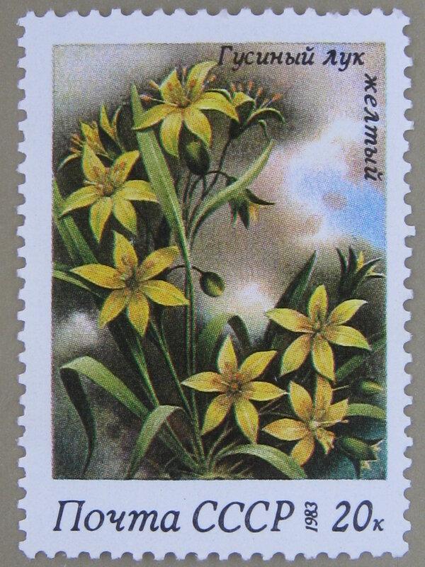 Гусиный лук жёлтый (Gagea lutea).