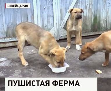 ферма собак.jpg