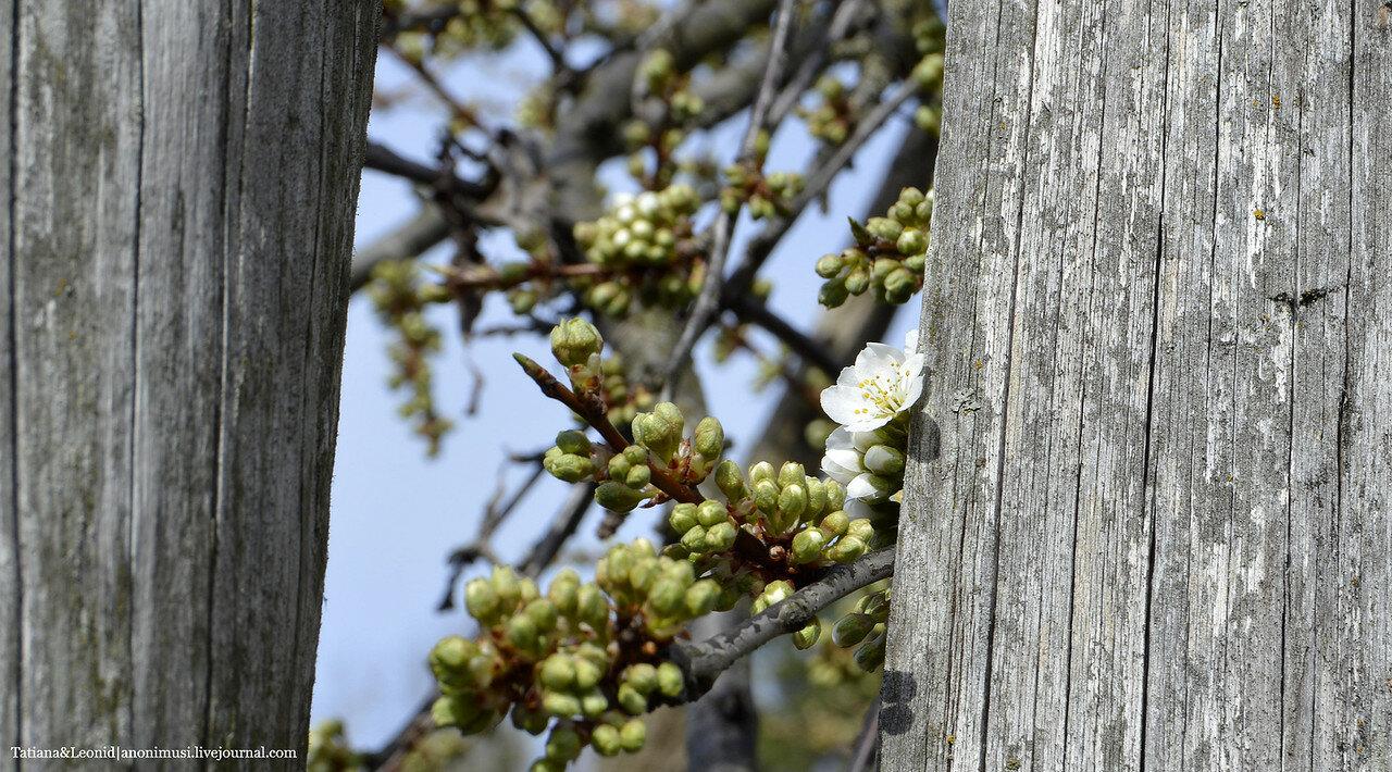 Выглядывает весна