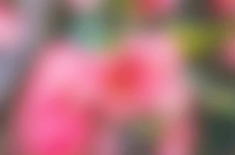 【制作网页素材篇】唯美的综合背景素材12 - 浪漫人生 - .