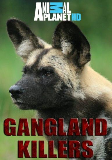 Discovery: Гангстеры дикой природы / Gangland Killers (2014) HDTVRip