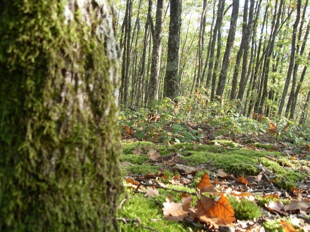 12 октября 2008, под Горячим Ключом, в лесу (94).JPG