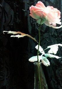 Роза - царица цветов 3 - Страница 2 0_1068a0_c917fb0d_M