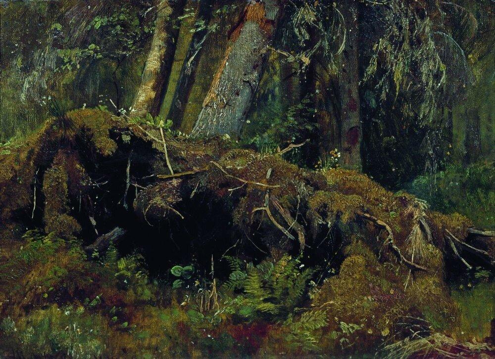Бурелом 1880 Картон,масло 26.3х36.1.jpg