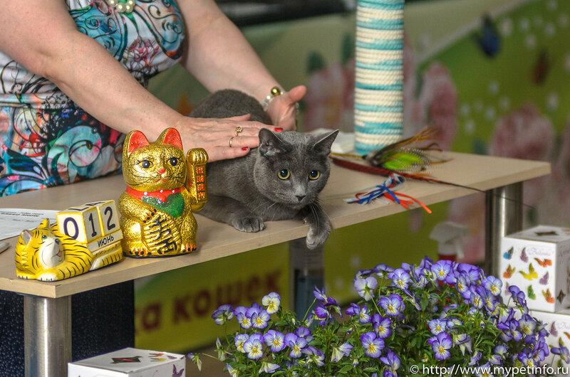 """Выставка кошек """"Летний Альянс - 2015"""""""