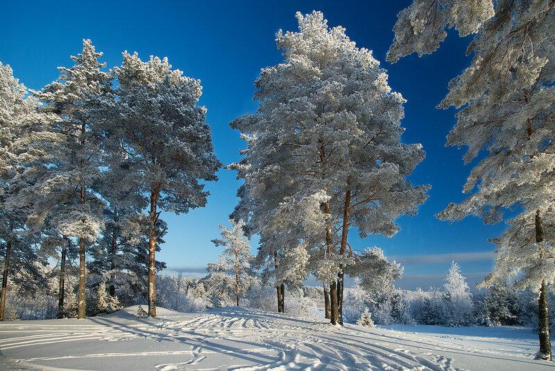 Мороз и солнце.....