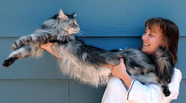 15bolshix-kotov-kotorye-nesomnevayutsya-vsvoej-krutosti-15-foto