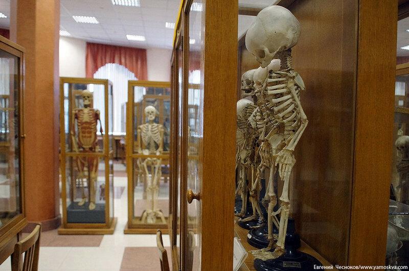Лето. МГМУ. Музей анатомии. 27.08.15.15..jpg