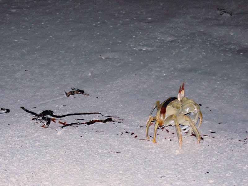 Краб на песке