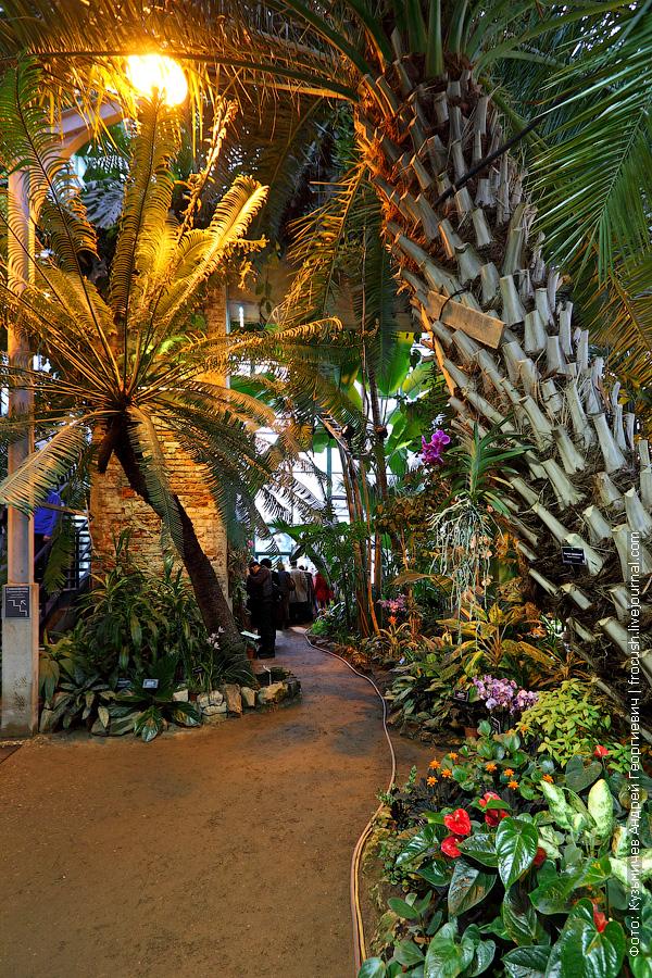 орхидея на финиковой пальме, слева на фото саговник улитковидный