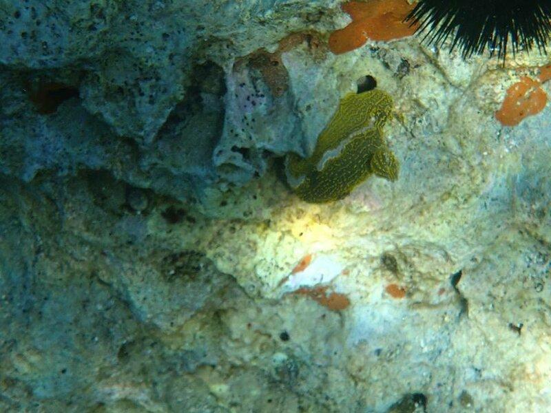 ядовитый моллюск.jpg