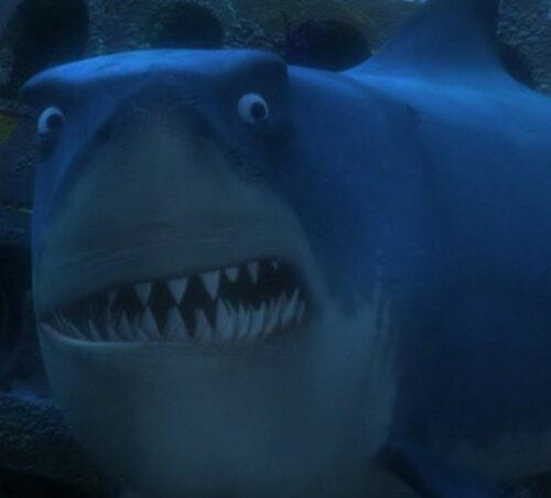 акула.jpg
