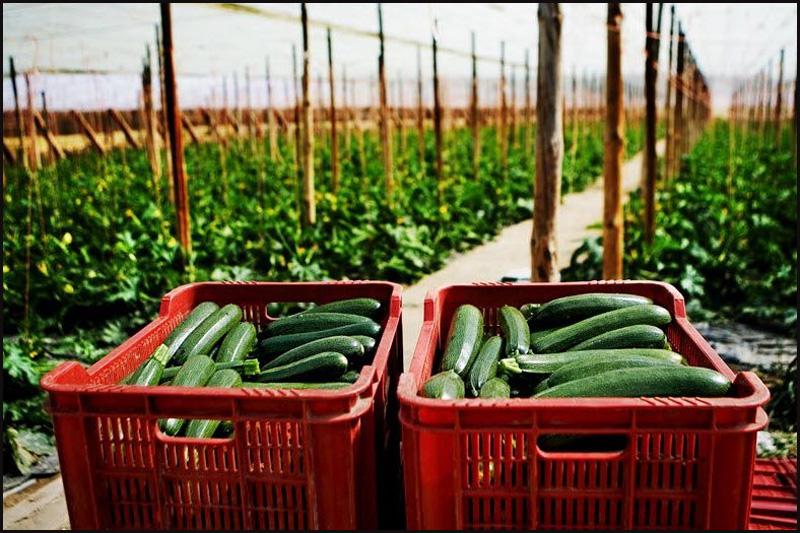 7. Альмерия – один из крупнейших в мире регионов по производству тепличных овощей. Каждый год здесь