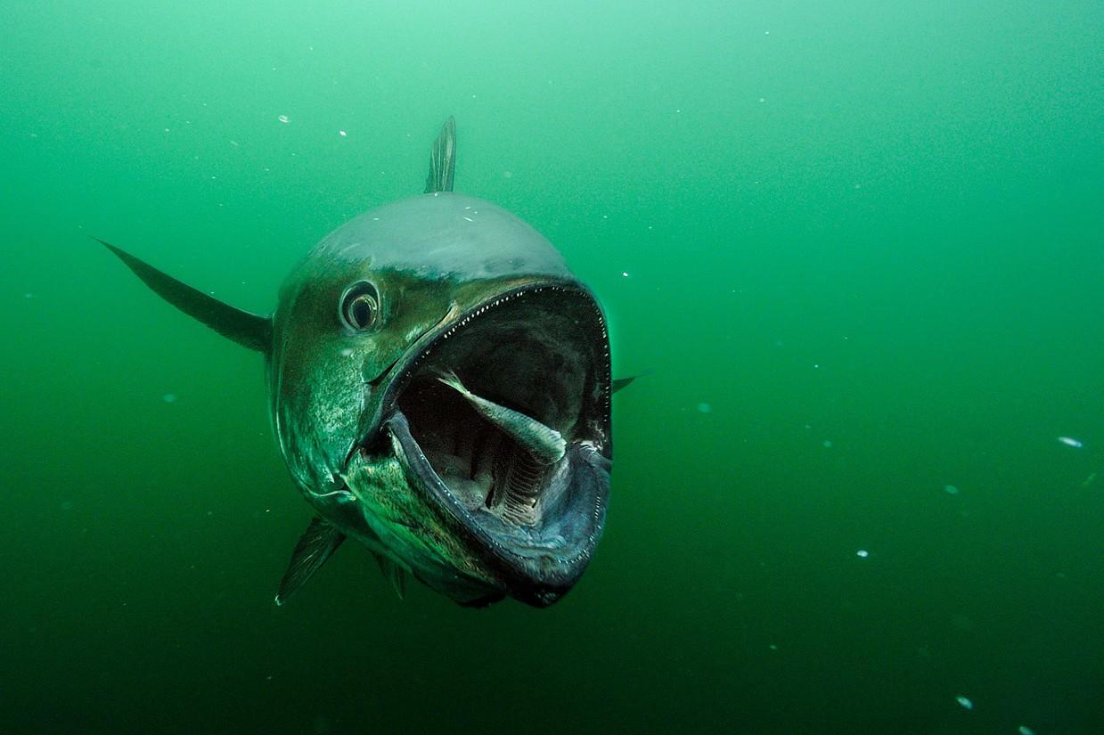 Редкие подводные кадры исчезающей морской жизни (11 фото)