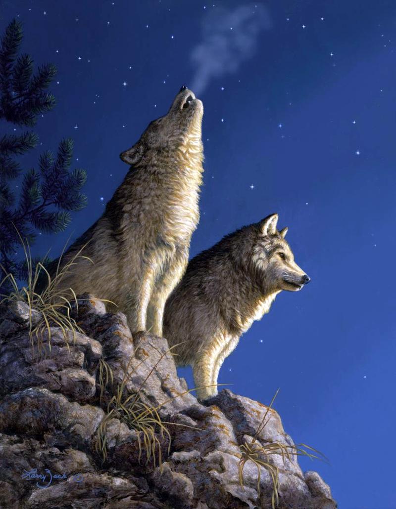 кастет картинки волки гифки комбинируя