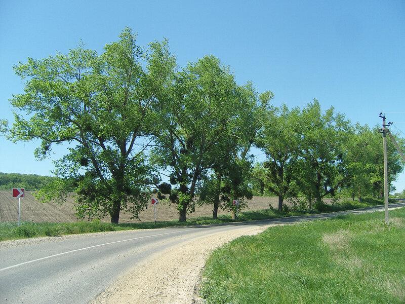 множество гнезд на деревьях