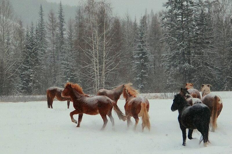Лошадушки...