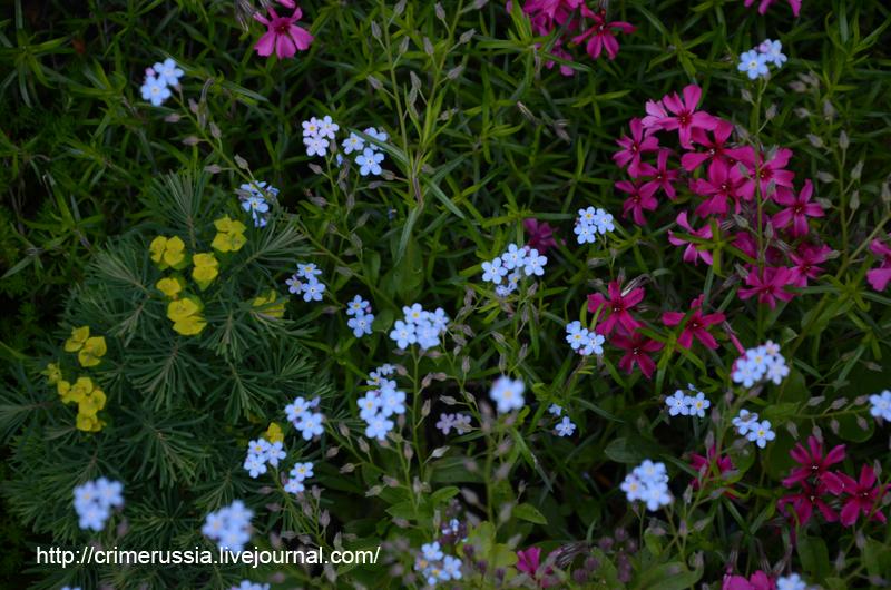 голубые сиреневые желтые цветы