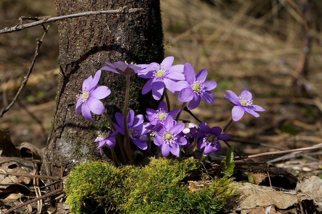 SG2002961. Уже весна.