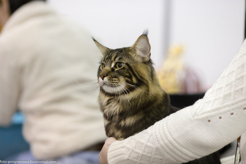 Выставка кошек 2014