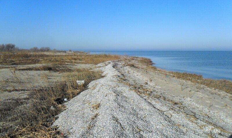 У моря, пески ... SAM_4517.JPG