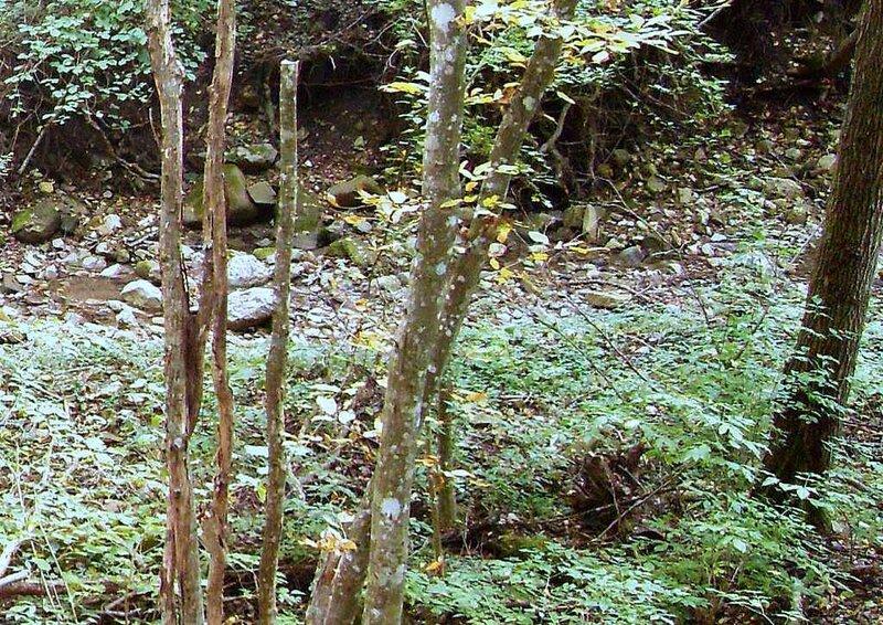 В лесу, под Горячим Ключом, у ручья (162).JPG