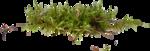 grass (41).png