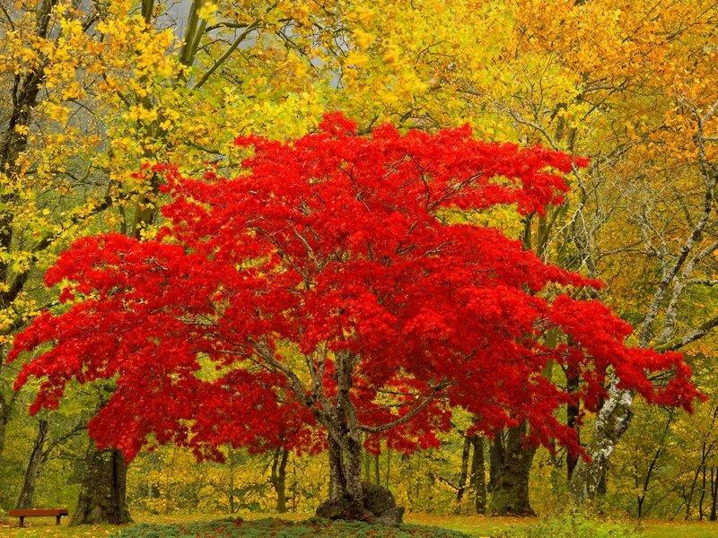 tree-magic[1].jpg