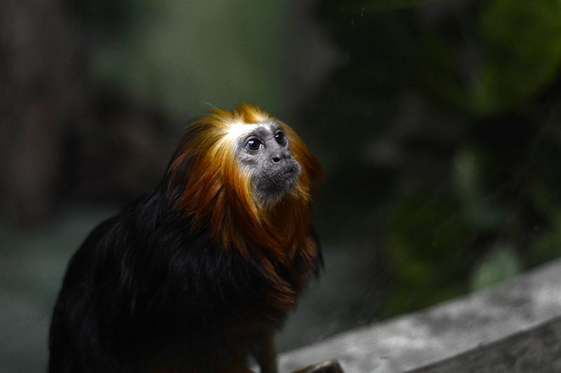 обезьянка взгляд