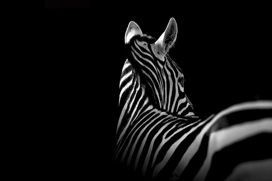 Лукас Холас. Черно белые портреты животных 0 1419c4 1fbf9577 orig